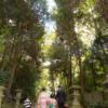 大阪 七五三 出張撮影 森林を歩く家族