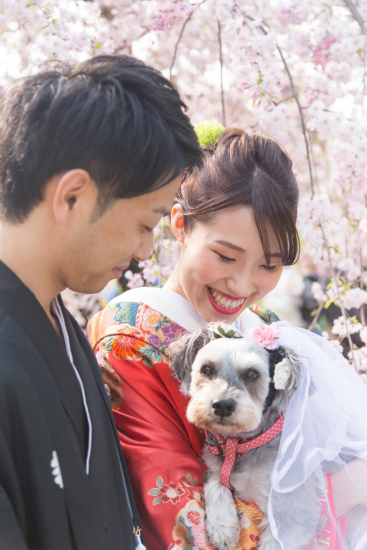 大仙公園 桜 前撮り 愛犬 日本庭園 和装