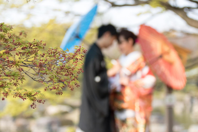 大仙公園 日本庭園 前撮り 紅葉 実