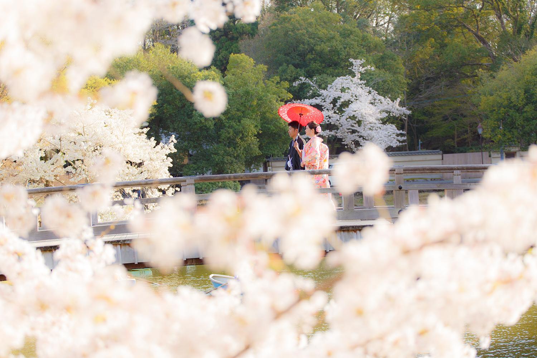 奈良公園 浮見堂 和装 前撮り 桜